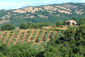 Tuscany, Grosseto farm for sale- Az.142