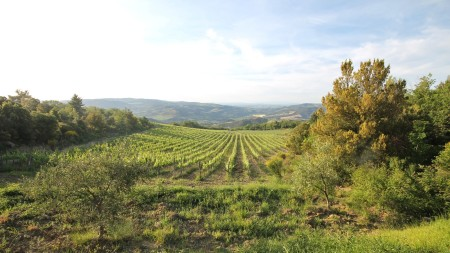 Tuscany vineyard for sale -Rif.Az152