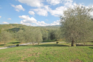 Tuscany, Seggiano house and houses for sale – Rif.864